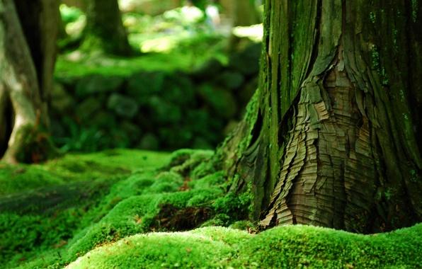 Картинка зелень, лес, лето, дерево, мох, кора
