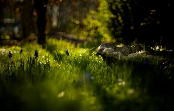 Картинка зелень, цветок, трава, солнце, макро, деревья, цветы, природа, фон, widescreen, обои, размытие, день, wallpaper, flower, …