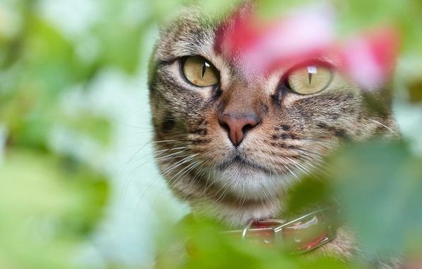 Картинка кошка, глаза, кот, взгляд, морда