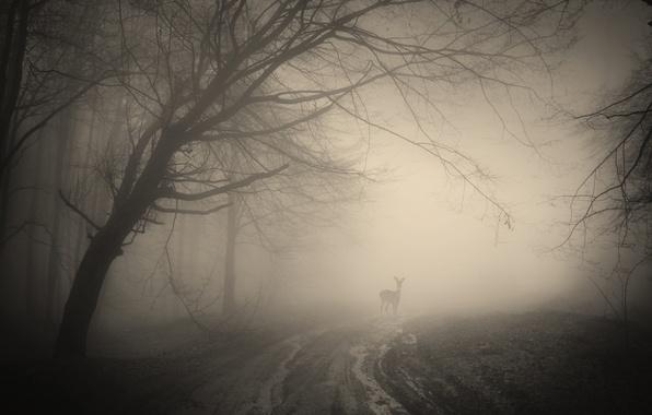 Картинка лес, деревья, пейзаж, природа, forest, олени, misty, trees, landscape, nature, deer, жуткий, creepy, туманный
