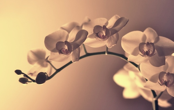 Картинка цветок, макро, цветы, ветка, лепестки, изгиб