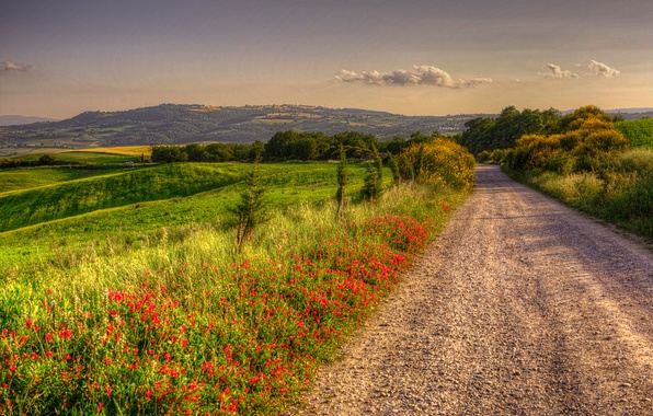 Картинка дорога, зелень, лето, трава, солнце, деревья, цветы, поля, Италия, кусты