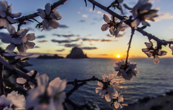 Картинка море, рассвет, sea, Sunset, island, sun, ibiza, almond, es vedra