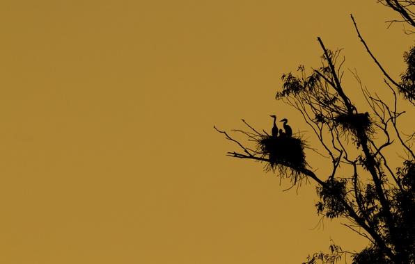 Картинка птицы, дерево, силуэт, гнездо