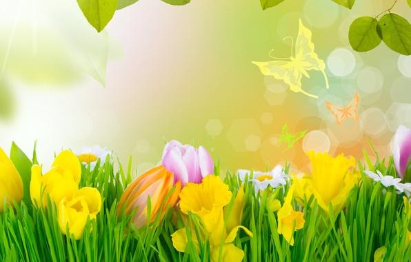 Картинка трава, цветы, весна, тюльпаны