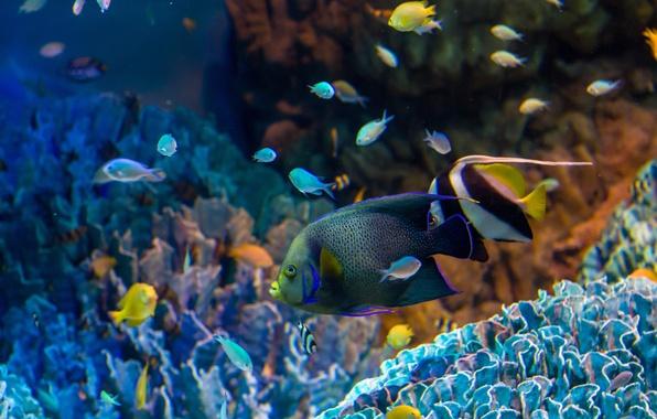 скачать обои плавающие рыбки на рабочем стол бесплатно