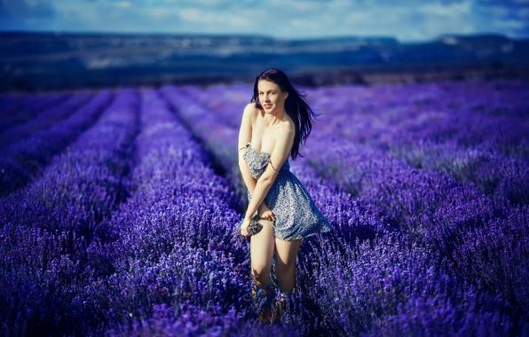 Картинка поле, девушка, цветы, декольте, ножки, лаванда, Katrina Blue