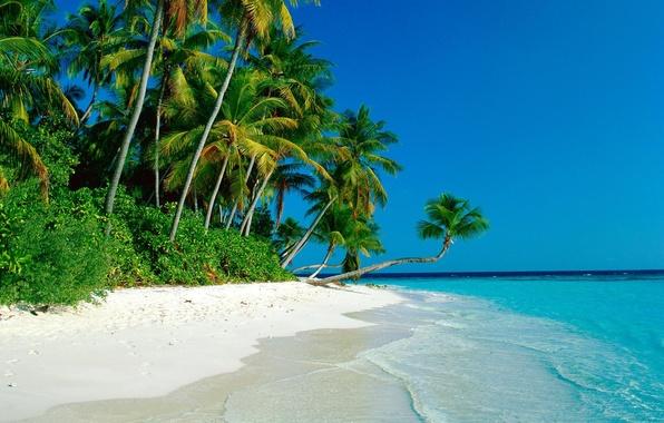 Картинка песок, море, пальмы, заросли, побережье