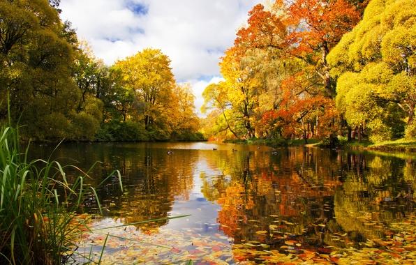Картинка осень, пруд, парк, река, Санкт-Петербург, Россия
