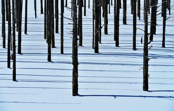 Картинка зима, лес, снег, деревья, тень