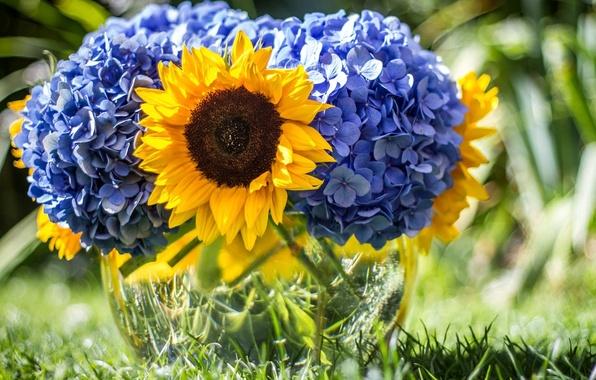 Картинка цветок, лето, цветы, природа, подсолнух, букет, голубые