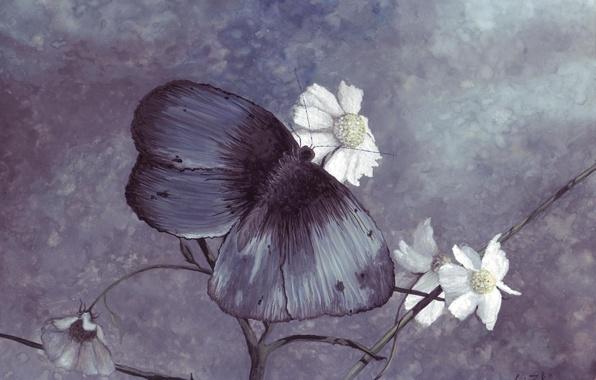 Картинка бабочка, рисунок, цвет, ромашки, синяя