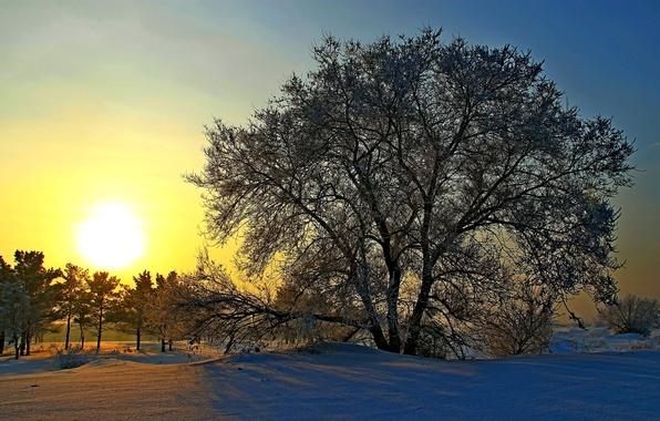 Картинка зима, солнце, снег, деревья, рассвет, Россия, Сибирь