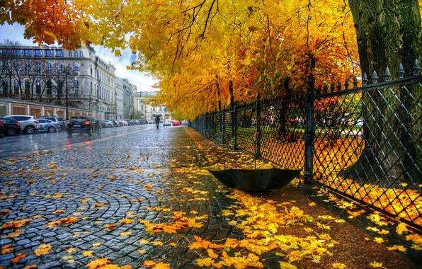 картинки на рабочий стол осень дождь