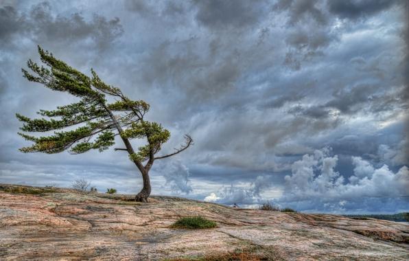 Картинка небо, облака, скала, дерево, ветер