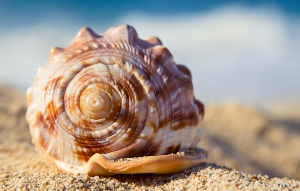 Картинка песок, пляж, лето, ракушка