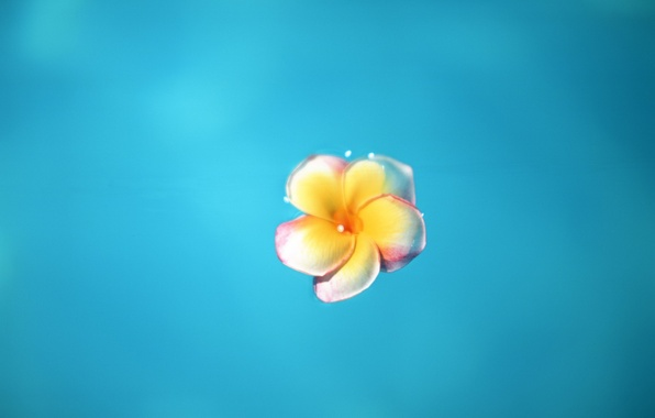 Картинка цветок, синий, Минимализм