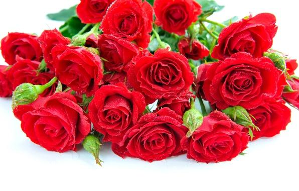 Картинка капли, цветы, розы, букет, лепестки, красные, белый фон