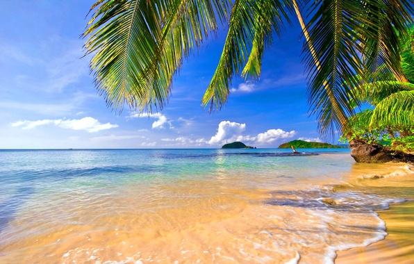 картинки море пляж пальмы