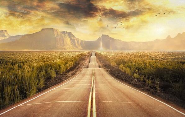 Картинка поле, облака, пейзаж, горы, птицы, обработка, Дорога