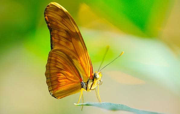 Картинка солнце, макро, лист, бабочка, крылья, насекомое, хоботок