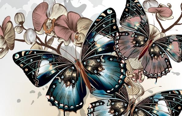Картинка цвета, бабочки, фон, крылья, вектор, окрас