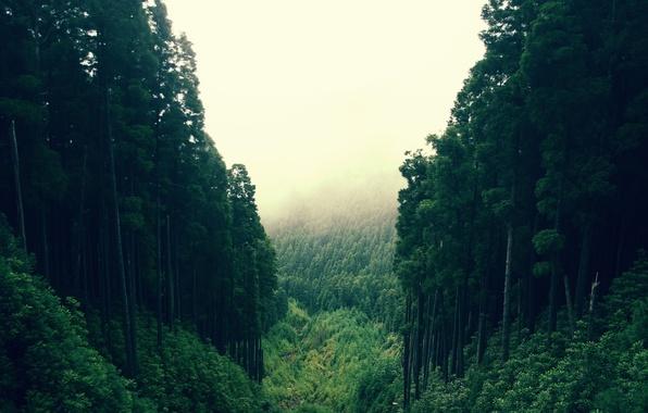 Картинка лес, дерево, овраг