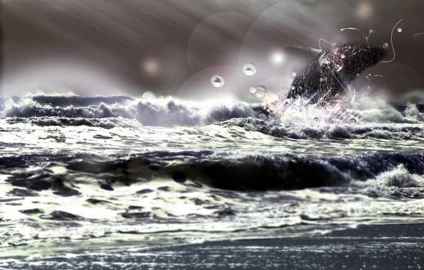 Картинка море, животные, энергия, свобода, лучи, круги, брызги, шторм, характер, природа, дельфин