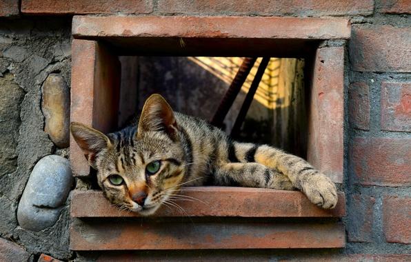 Фото обои усы, дырка, отдых, стена, лапы, кот