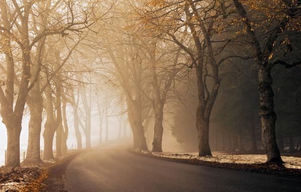Картинка дорога, осень, асфальт, свет, снег, деревья, туман, путь, забор, утро, обочина, мгла, время года, посадки, …
