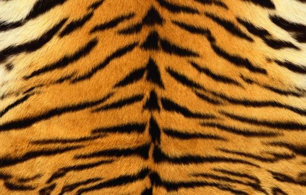 Картинка полоски, тигр, шкура, мех, полосатый