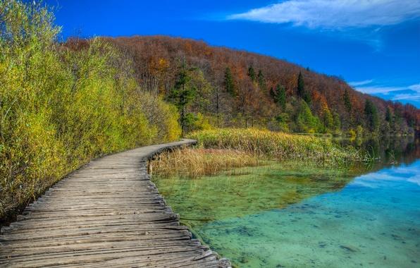 Картинка осень, лес, небо, деревья, озеро, склон, дорожка, гать