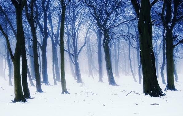 Картинка зима, лес, снег, деревья, ветки, природа, туман