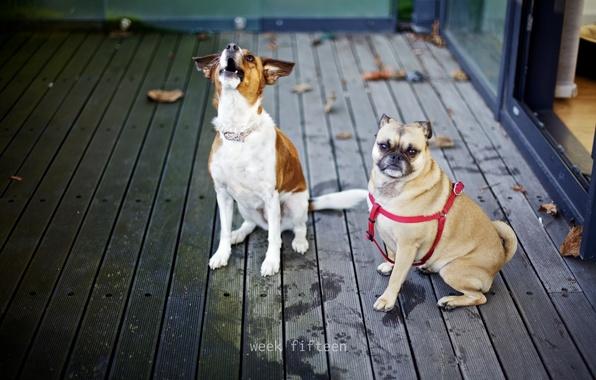 Картинка собаки, настроение, друзья