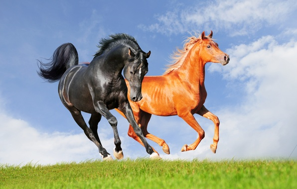 Картинка небо, трава, облака, конь, лошадь, аллюр