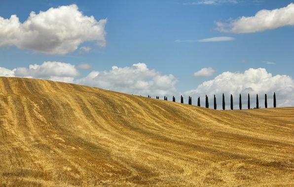 Картинка поле, осень, деревья, холмы, Италия, Тоскана