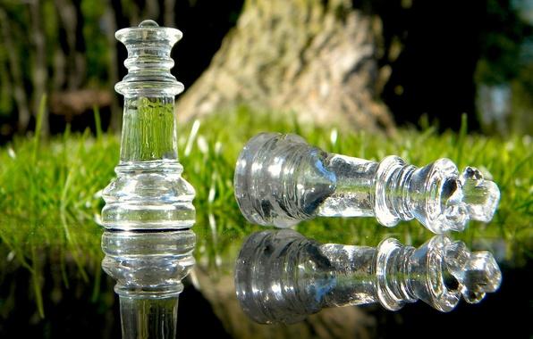 Картинка трава, стекло, вода, макро, природа, отражение, игра, шахматы, королева, macro, chess, король, стратегия, ход, обман, …