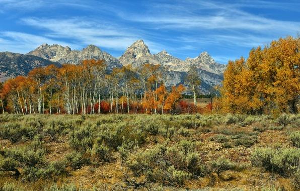 Картинка осень, деревья, пейзаж, горы