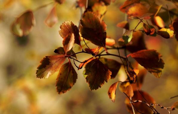 Картинка осень, макро, листва, ветка, Janet рhotography