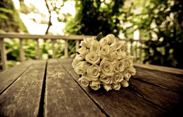 Картинка белый, цветок, листья, цветы, фон, дерево, widescreen, обои, роза, розы, букет, размытие, красиво, wallpaper, цветочки, ...