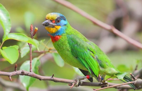 Картинка листья, дерево, птица, цвет, ветка, перья, клюв