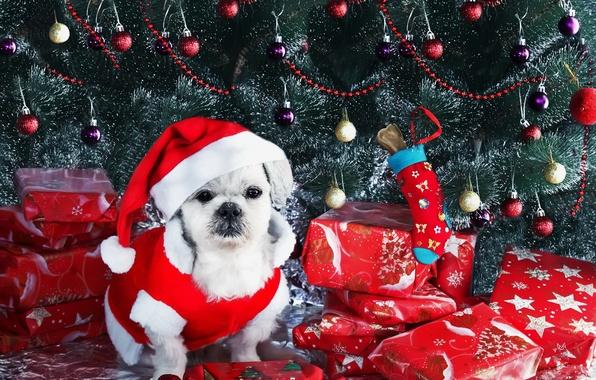 Фото обои собака, взгляд, праздник, друг