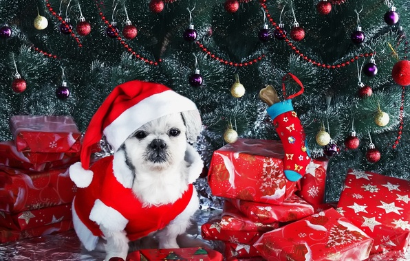 Картинка взгляд, друг, праздник, собака
