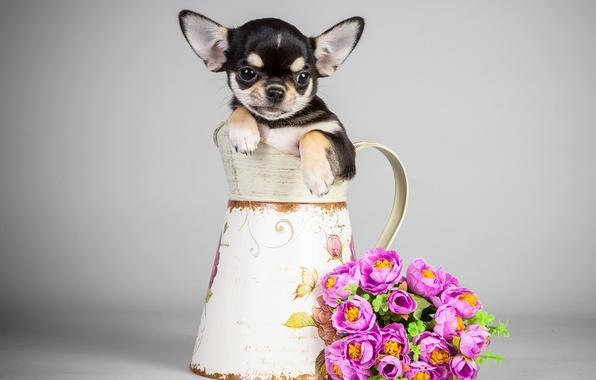 Картинка цветы, собака, букет, щенок, кувшин, puppy, flowers, bouquet, pitcher, the dog
