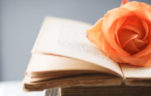 Картинка цветы, оранжевый, стиль, фон, обои, роза, книга, книжка, страницы, wallpapers, цветочек