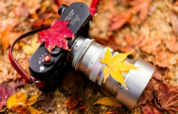 Картинка Camera, autumn colors, Leica