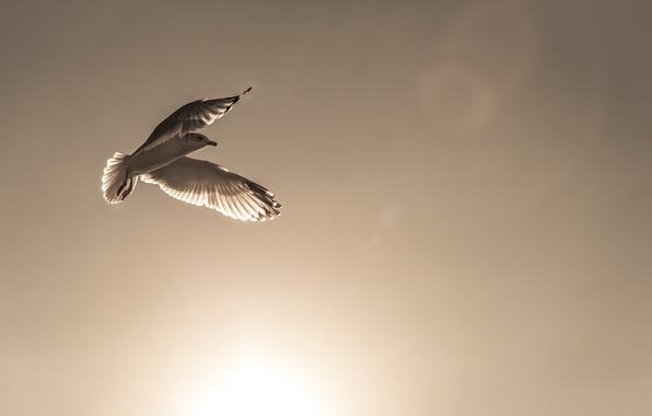 Картинка небо, птица, мир