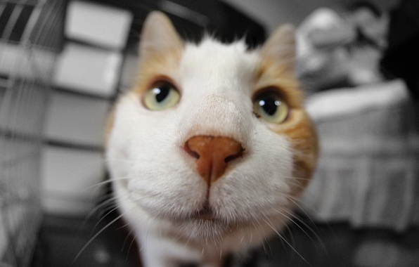 Картинка кошак, мордочка, котяра, котэ
