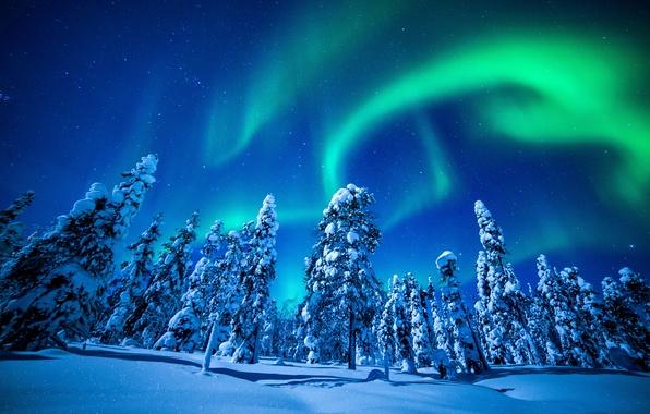 Картинка фото, Природа, Зима, Снег, Ель, Сияние