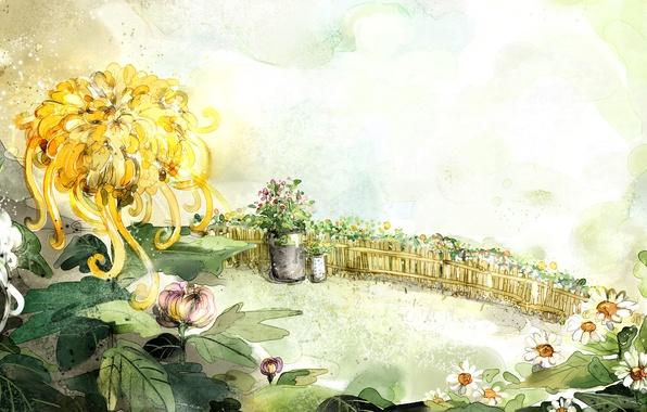 Картинка цветы, рисунок, забор, ромашки, ведро, хризантемы